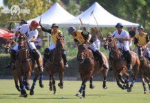 polo-king-sports